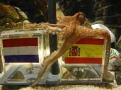 Football Finals Spain Octopus Paul Parrot Mani