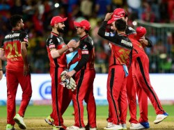 Spectators Can Watch Ipl 2019 Matches With Their Pets Royal Challengers Bangalore Announced