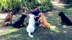 Ravi Shastri Does Huddle With Dogs Goes Viral