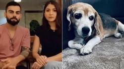 Kohli S Pet Dog Bruno Dies