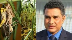 Sanjay Manjrekar Receives Criticism For His Comment About Locusts