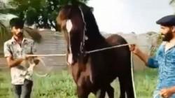 Ravindra Jadeja Goes For A Walk With Horse